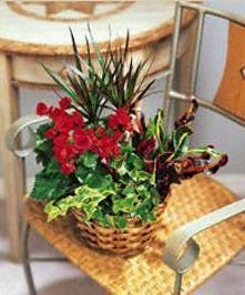 Green & Blooming Garden Planter in a Basket